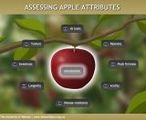 Assessing apple attributes