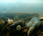 How mussels spawn