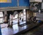 Automatic milking and getting the robots to work 24/7