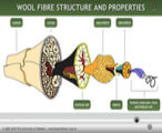 Wool fibre structure and properties.